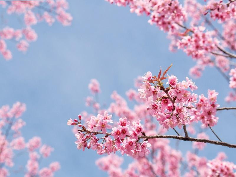 春の出会い
